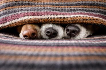 Cuatro juegos para estimular el olfato en perros