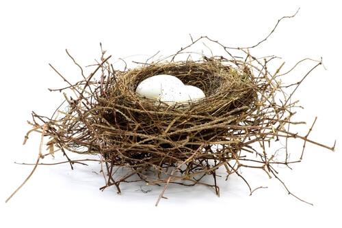 Un nido sobre fondo blanco.