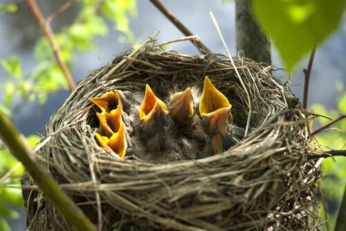 Todo lo que debes saber sobre los nidos de las aves