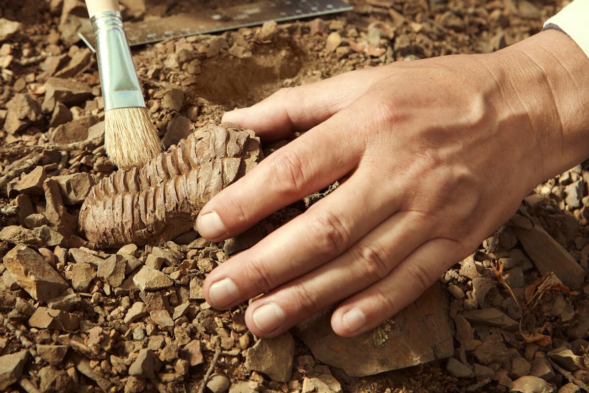 Paleontología: una mirada detectivesca al pasado