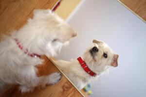 ¿Son los perros autoconscientes?