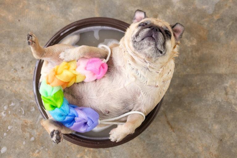 ¿Es recomendable bañar a un perro con jabón neutro?