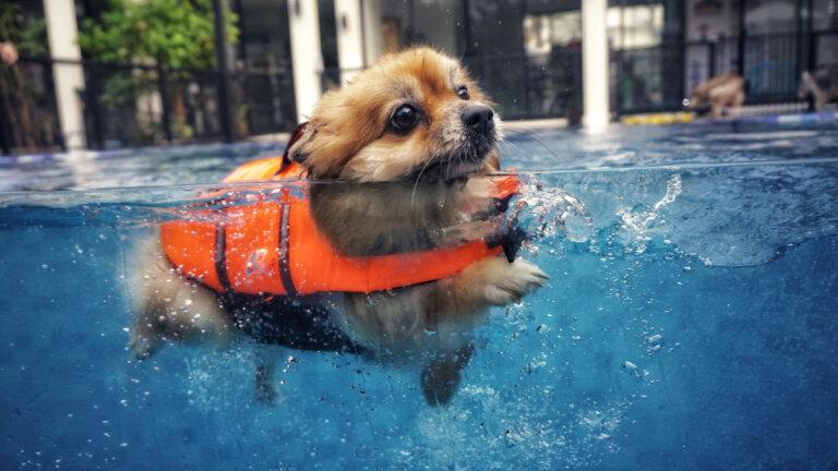 Nadar con perros: 5 consejos para garantizar el gozo