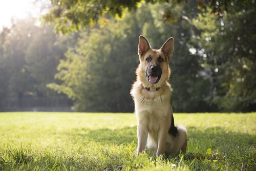 Los perros guarda son esenciales.