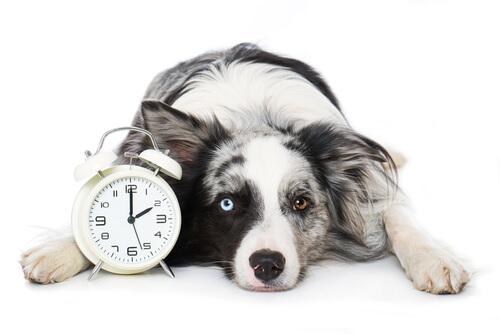 ¿Son los perros capaces de oler el tiempo?