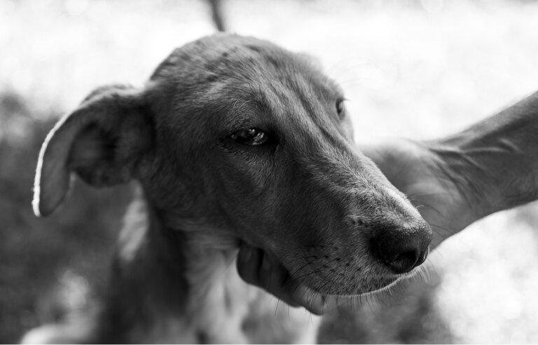Causas de la anemia hemolítica en mascotas