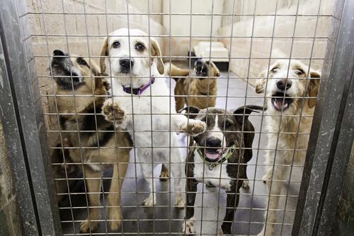 Perros mal cuidados en una perrera.