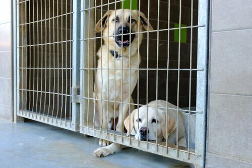 Dos perros tristes en una jaula.