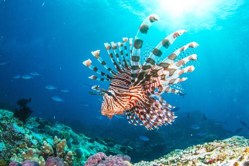 El pez león: nuevo residente del mar Mediterráneo