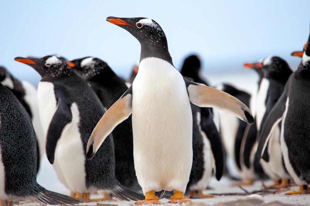 Comportamiento de los pingüinos