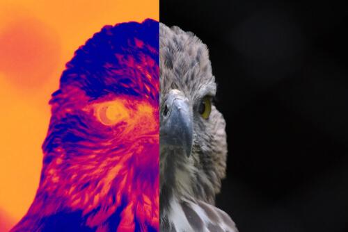 La termografía y su uso en medicina veterinaria