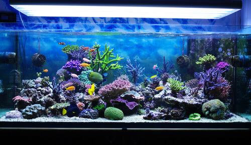 Un acuario marino en casa: majestuosidad con diversos cuidados