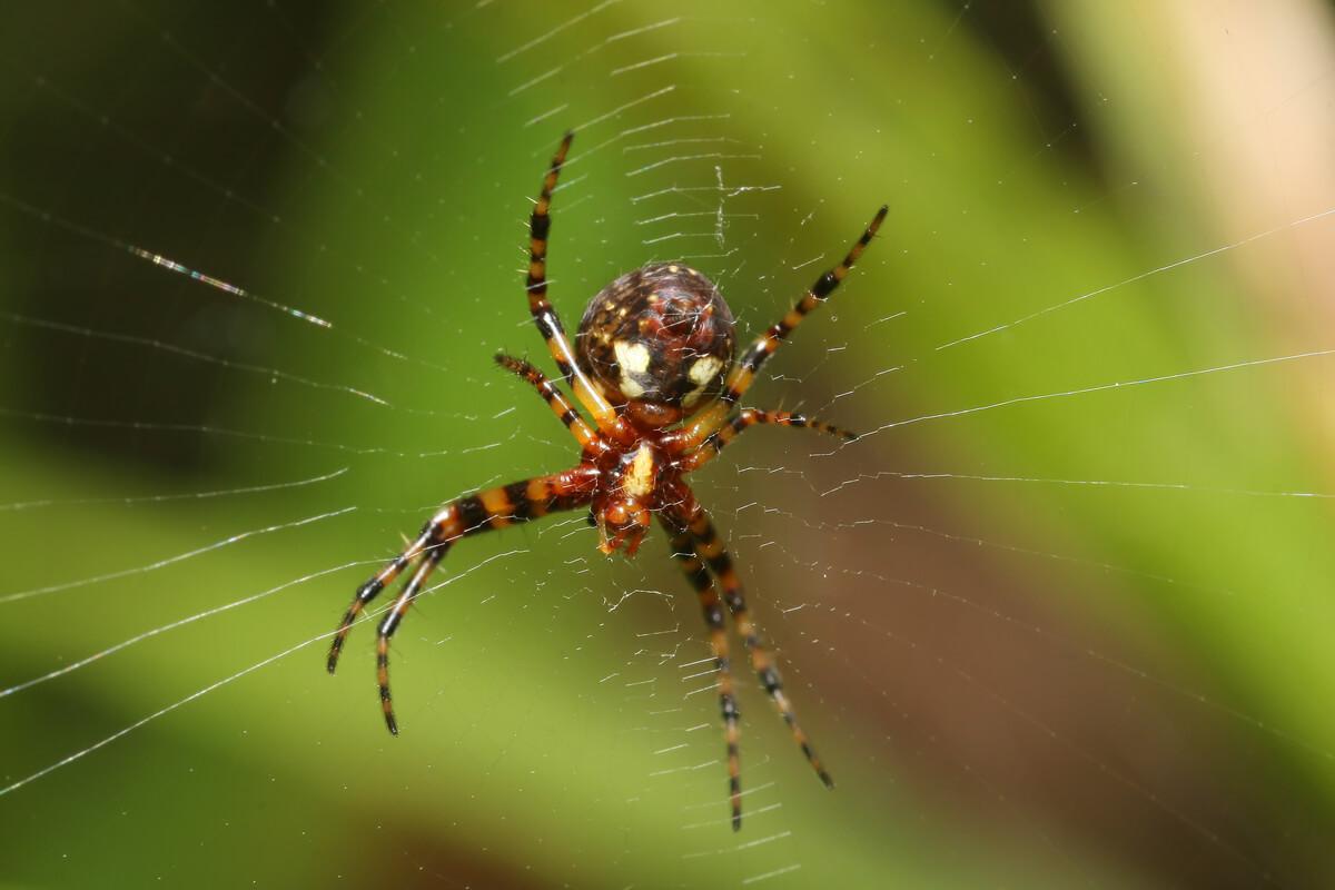 Una araña en su tela.