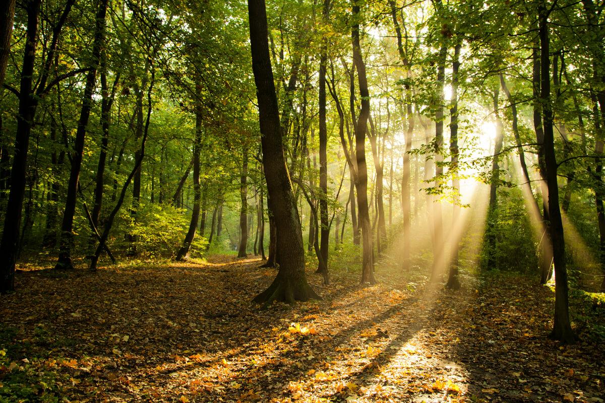 Animales que ayudan a regenerar los bosques