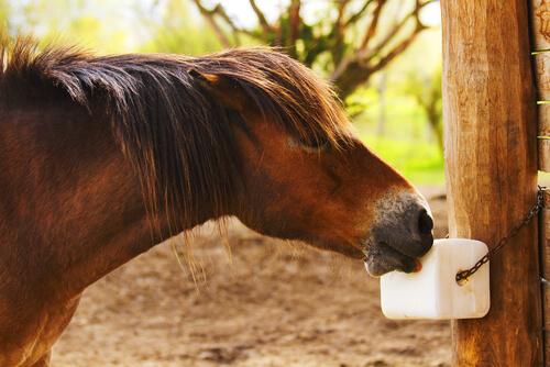 La sal es importante para la salud del caballo.