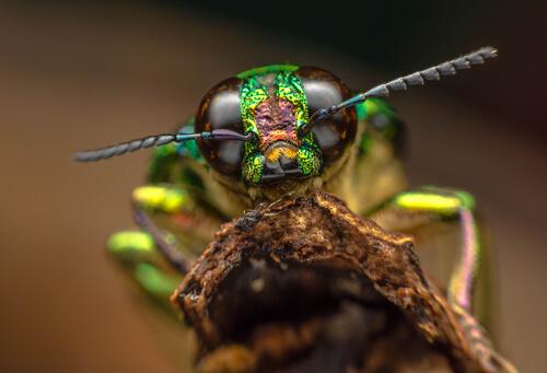 ¿Sienten los insectos dolor?