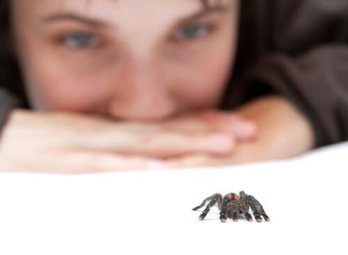 Combatir el miedo a las arañas es difícil pero posible.