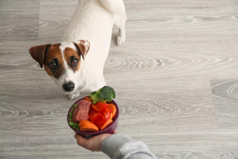 Minerales esenciales para mascotas