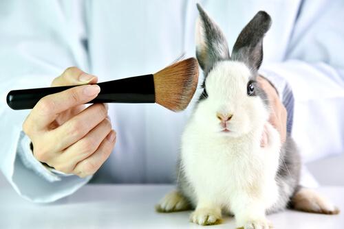 Los ensayos cosméticos en animales vulneran sus derechos.