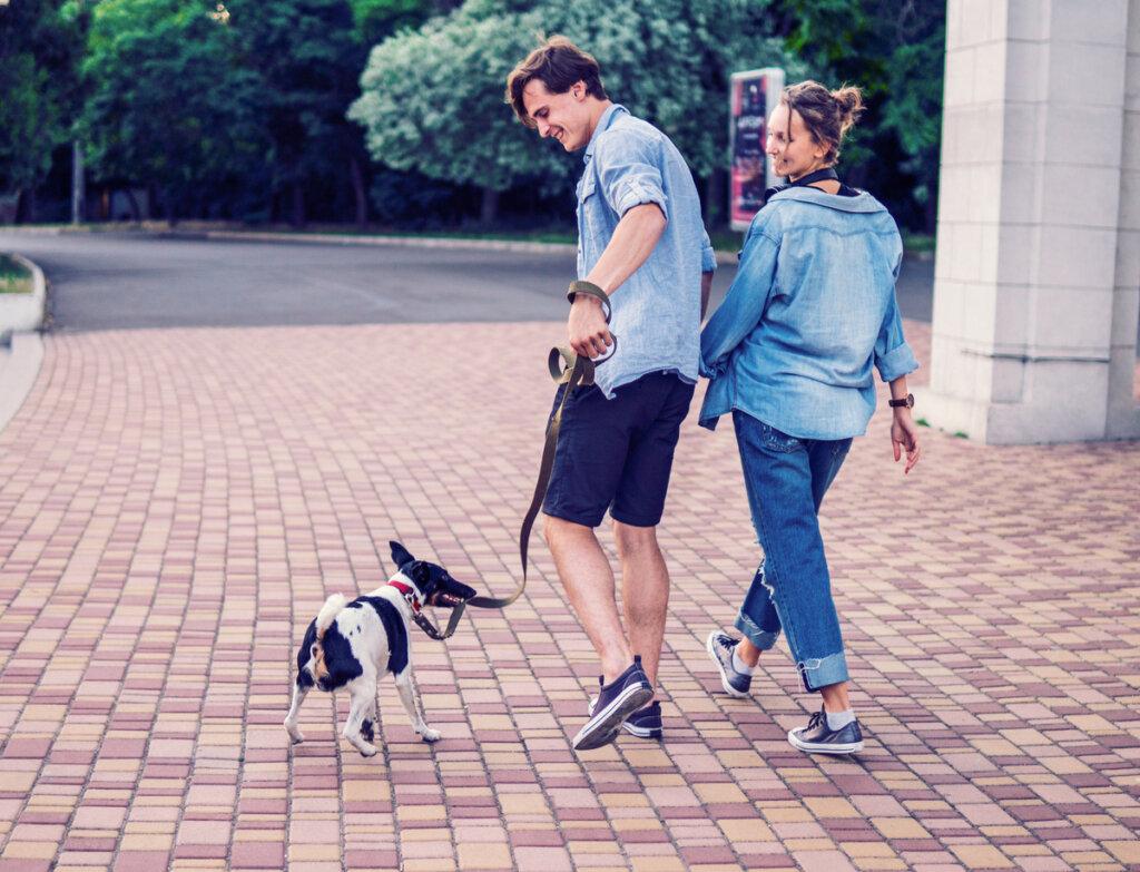 Los paseos diarios: cinco consejos para animar a tu perro