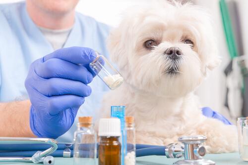 ¿Sabes cuánto medicamento dar a un perro?