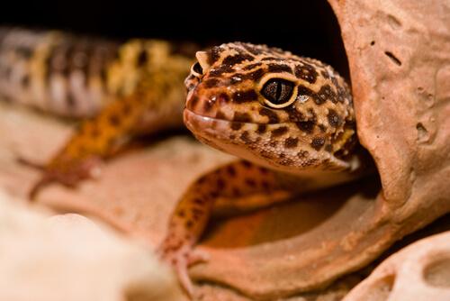 Un calor desmesurado en el terrario puede matar a los reptiles que este alberga.