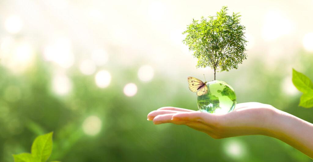¿Qué es la sucesión ecológica?
