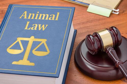 ¿Cuándo necesitan los animales un abogado?
