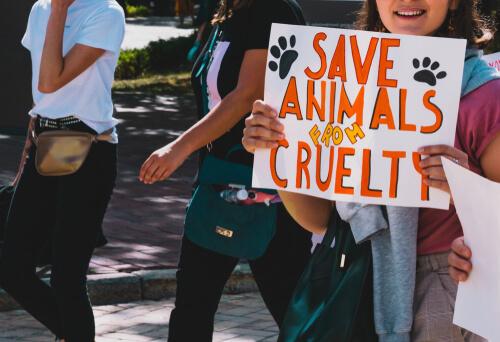 Los derechos animales han de estar respaldados por los programas políticos.