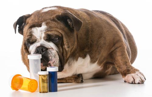 ¿Cómo saber cuánto medicamento dar a un perro?