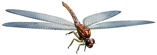 Los insectos gigantes poblaron la tierra.