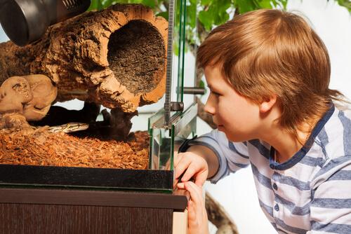¿Cómo mantener el terrario frío durante el verano?