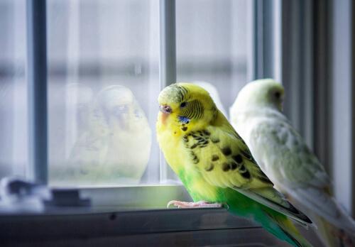 Depresión en pájaros: ¿es posible?
