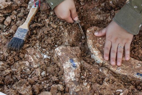 Un paleontólogo descubre un hueso.