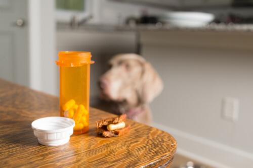 ¿Existen los ansiolíticos para perros?