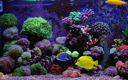 Un acuario marino en casa.