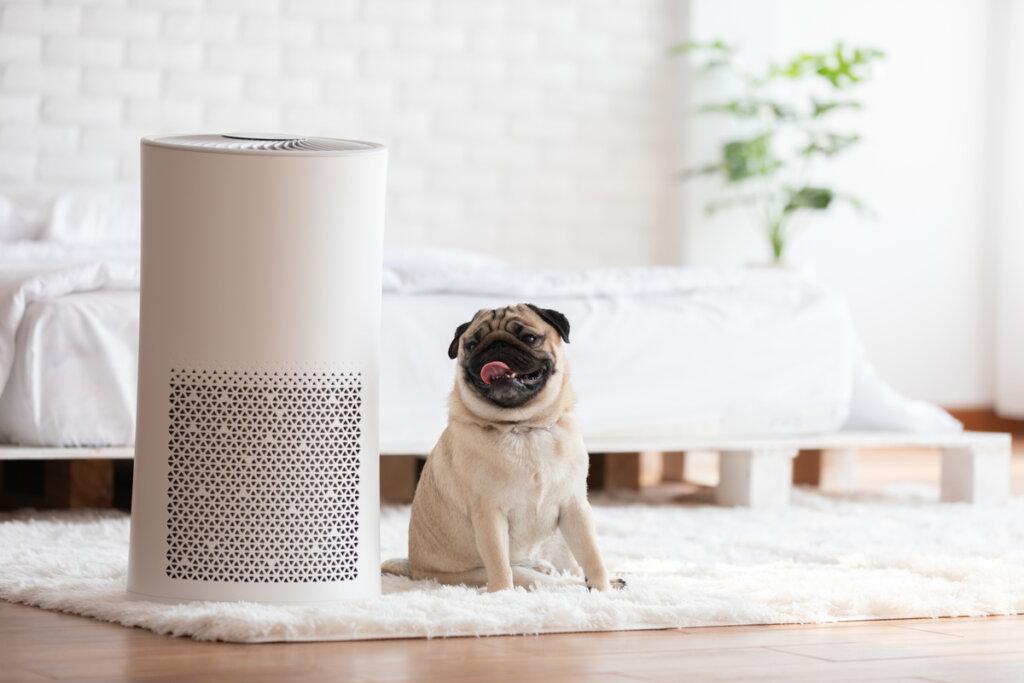 El mal olor de las mascotas: ¿cómo tratarlo?