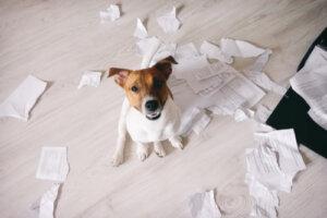 Refuerzo negativo en perros: qué no hay que hacer
