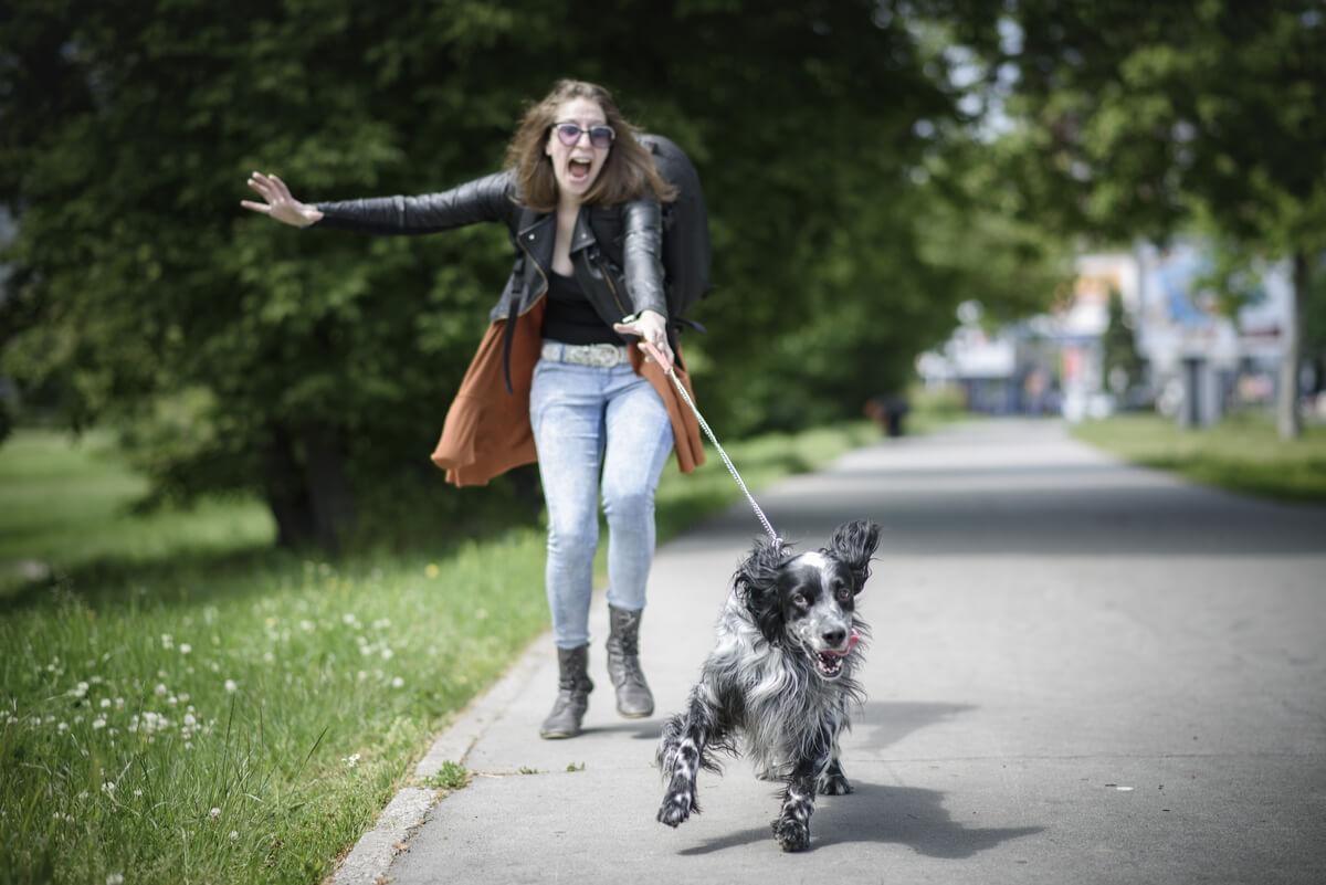 Perros y paseos diarios.