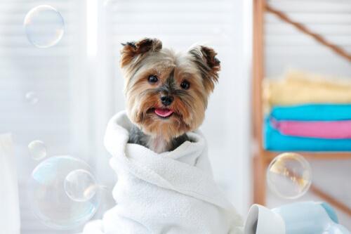 ¿Cómo limpiar a las mascotas con toallas húmedas?