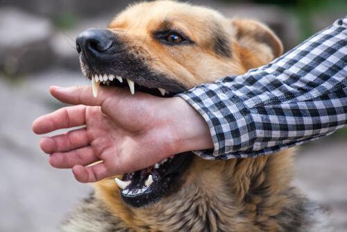 Un perro muerde a un hombre en la mano.