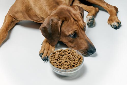 Teniasis canina: una aproximación clínica
