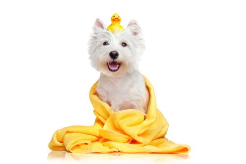Las toallas húmedas para mascotas son una alternativa puntual al baño.