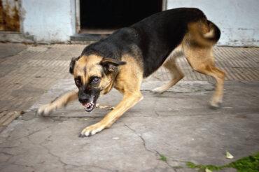 ¿Cómo actuar si un perro ataca?