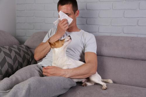 Perros hipoalergénicos: seis cosas que debes saber