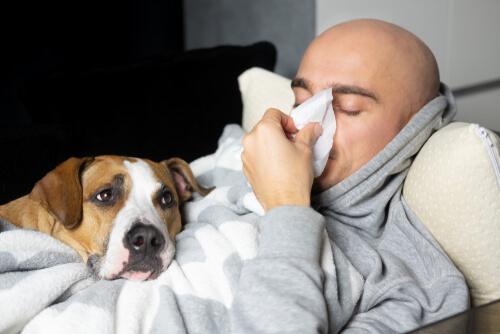 ¿Puede una persona inmunocomprometida tener una mascota?