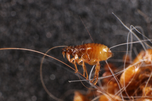 ¿Por qué es importante evitar los parásitos en mascotas?