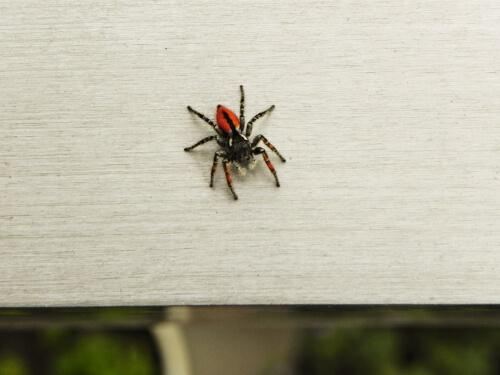 Miedo a las arañas: ¿cómo superarlo?