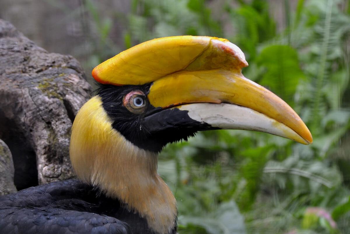 La cabeza de un ave hornbill.