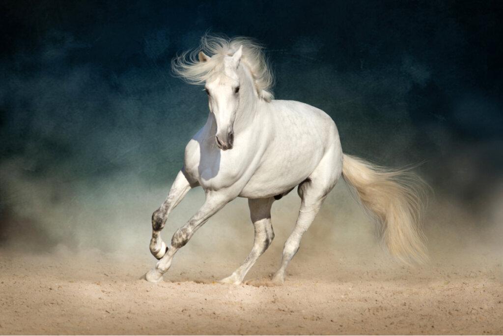 Prevención y detección rápida de los cólicos en caballos
